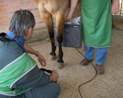 Vidisco Launches a New Product Line for Equine Veterinary
