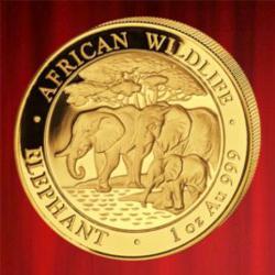 Buy 2013 1oz Gold Somalia Elephant, African Wildlife, from BullionUK.com