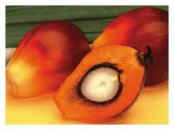 Buy Red Palm Oil