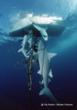 Jeff Corwin Raises Awareness of Sharks in Support of the Species Getting International Protection from CITES