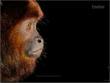 amazon rainforest,amazon reain forest vacations,hiking,climbing rainforest adventure,ecotourism,adventure travel,hike the amazon,Ariau Amazon Towers