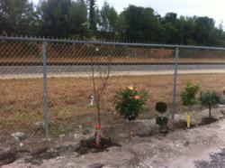 Into Action Treatment Drug Rehab plants 40th tree