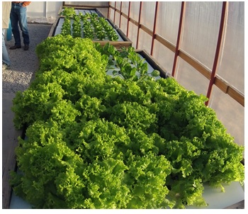 Endless Food Systems Launches New Line Of Home Aquaponics