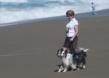 DogTrekker.com National Survey Finds: It's Getting Easier to Travel With Dogs, Though Obstacles Still Remain