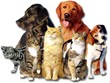 Complementary Pet Food Recipe