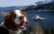 Bodie awards Lake Tahoe four paws for being dog-friendly