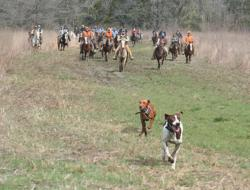 A scene from the 2012 AKC Gun Dog Championships