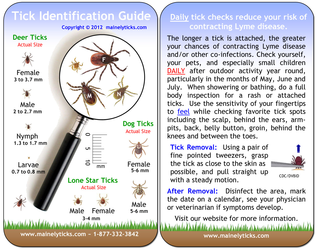 Lyme Disease Prevention Begins With Proper Tick