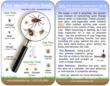 Tick Identification Guide