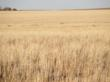 Cheyenne County real estate auction, Cheyenne County farmland auction, Cheyenne County farm auction, Colorado land for sale, Colorado farmland for sale, Colorado acreage for sale, Colorado farm for sale, Colorado real estate for sale