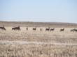Colorado land auction, Colorado farmland auction, Colorado acreage auction, Colorado farm auction, Colorado real estate auction, Colorado investment property for sale, Cheyenne Country investment property for sale, Colorado investment property auction, Ch
