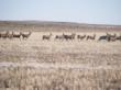 Colorado land auction, Colorado farmland auction, Colorado acreage auction, Colorado farm auction, Colorado real estate auction, Colorado investment property auction, Cheyenne Country investment property auction, Colorado investment property auction