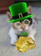 Photo of St. Patrick's Day cat