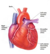 Heart Disease @ TriScience.com