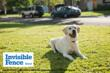 Invisible Fence® of Northern Vermont Brings Peace of Mind to Pet Owners
