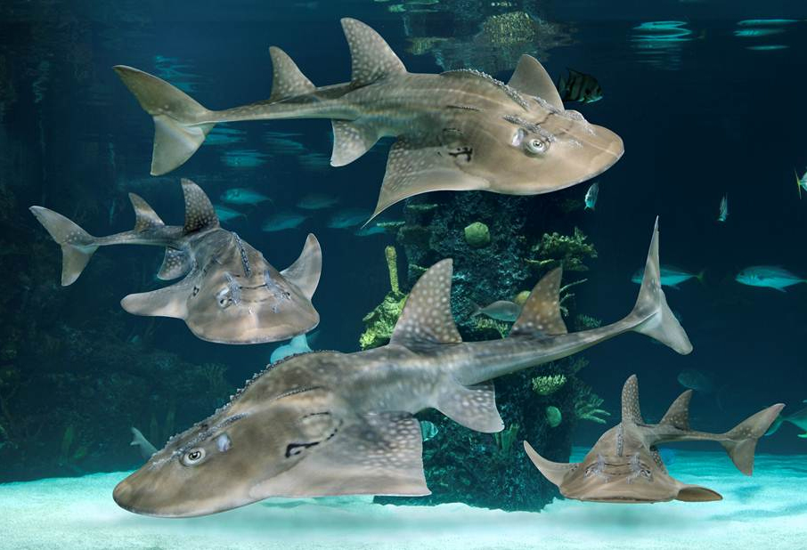 ... Shark Rays Newport Aquarium features the Largest Collection of Shark