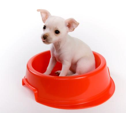 The Definitive  Kosher For Passover Dog Food List