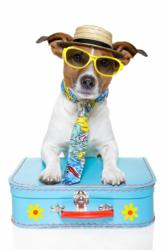 Dogington Post Gears Up for Spring Travel Season