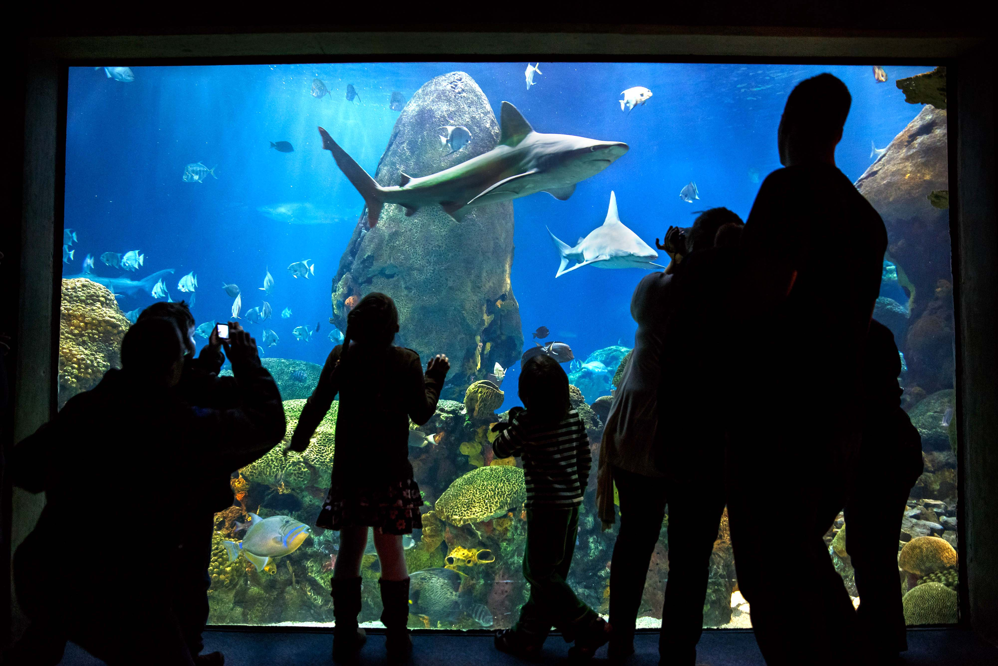 Tennessee Aquarium Expects 20 Millionth Visitor This Weekend