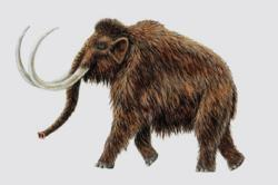 Long extinct, the woolly mammoth may be back with the help of Russian and Korean scientists