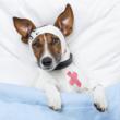 FetchRx.com, an Online Pet Pharmacy is Now Open