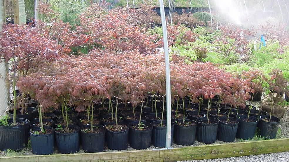 Trees Shrubs And Potted Plants To Sell At Indiana