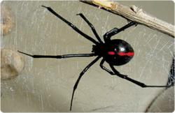Plano Pest Control