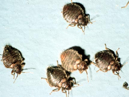 News Says Bed Bugs Hits Michigan Office My Cleaning