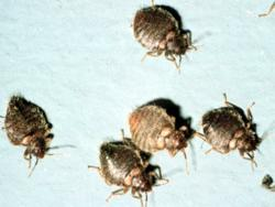 News Says Bed Bugs Michigan Office My Cleaning Products Erts Bug Bully Is The Right Help To Clear Pests