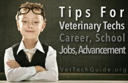 veterinary technician tips guides