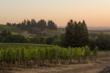 Sokol Blosser Vineyard- Andrea Johnson Photography