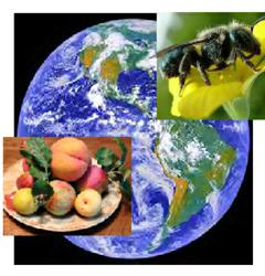 Earth from space with picture of pollinating mason bee and food on a plate