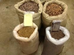 cocoa ingredients