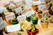 Mini potted succulents as both seating cards and favors