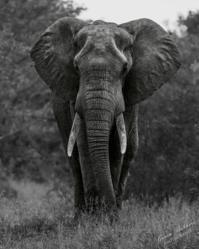 http://imagesinafrica.com