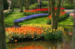 Tulips in Holland on a bicycle tour with BikeToursDirect.