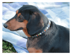 Just Fur Fun - Candy Shop Dog Collar