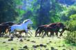 A herd of mustangs roams free at the Wild Horse Sanctuary.