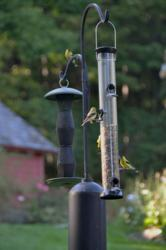 Birds and bird feeder