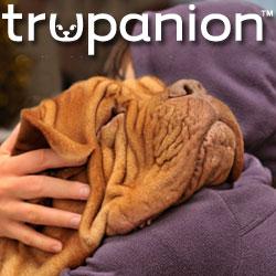 dog, dogs, pets, pet insurance