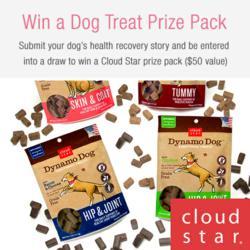 Dog Health Contest