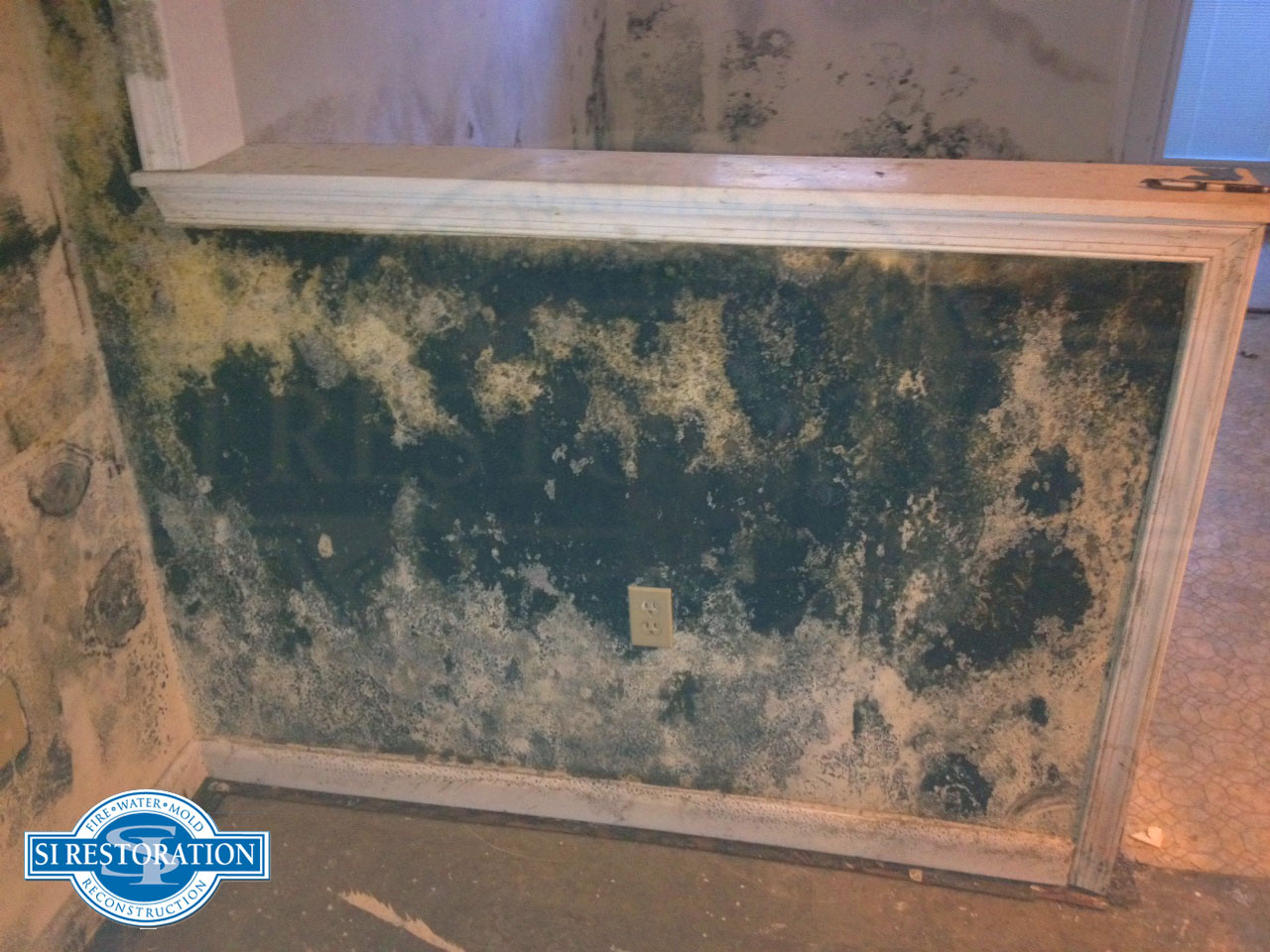Toxic black mold has experts calling homeowners to action - What to do about mold ...