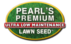 Drought-resistant, environmentally friendly lawn seed