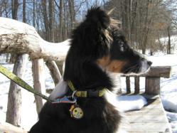 Custom pet id tags matching Lupine patterns