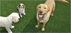 lawn cover,artificial grass,dog-friendly artificial grass,synthetic grass,dog--friendly landscaping,ultimate grass