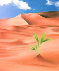 Green shoots growing in an orange desert