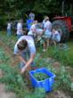 132 FFA Chapters Receive National 'FFA: Food for All' Grants to Help...