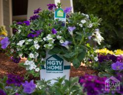 HGTV HOME Plant Collection Purple Genius