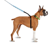 "The award-winning ThunderLeash, a ""no pull"" solution for dog owners."