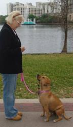 Training Nnyus at Eola Park in Orlando, FL